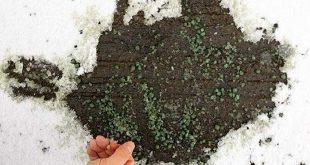 turk kimyagerden kar ve buzu kisa surede eriten granul buz yak 310x165 - Türk Kimyagerden Kar ve Buzu Kısa Sürede Eriten Granül: Buz Yak