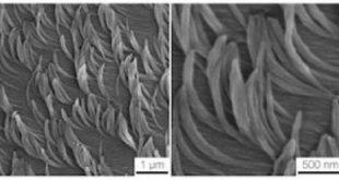 yeni nanofiber halilar yapiskan veya yalitici ozelliklere sahip yuzeylere yol acabilir 310x165 - Yeni Nanofiber Halılar Yapışkan veya Yalıtıcı Özelliklere Sahip Yüzeylere Yol Açabilir