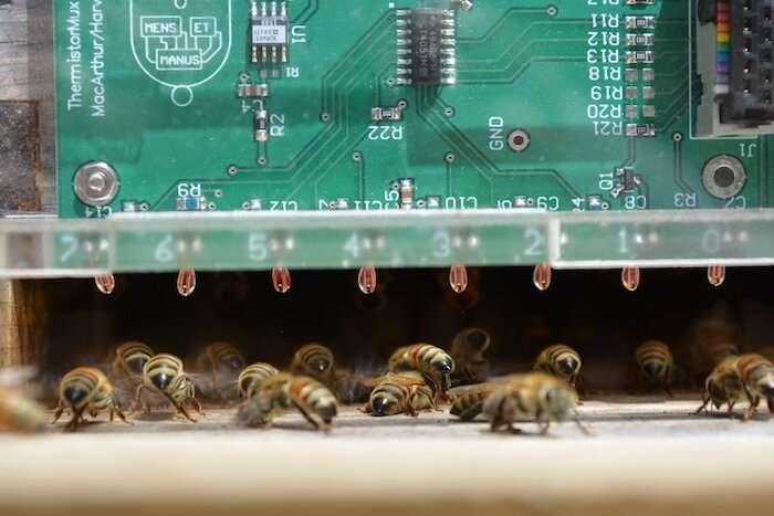 Arılar Sıcak Yaz Günlerinde Nasıl Serin Kalır
