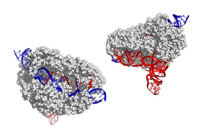 Bilim İnsanları, CRISPR Gen Düzenleme için Yeni ve Çok Daha Küçük Bir Gen Buldu