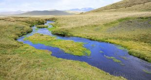 biyoloji profesoru nehir ekolojisini kuresel boyutta inceledi 310x165 - Biyoloji Profesörü, Nehir Ekolojisini Küresel Boyutta İnceledi