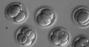 cinli bilim adami dunyanin genetik olarak duzenlenmis ilk bebeklerini yarattigini iddia ediyor 310x165 - Çinli Bilim Adamı 'Dünyanın Genetik Olarak Düzenlenmiş İlk Bebeklerini' Yarattığını İddia Ediyor