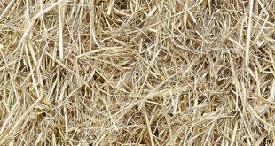 gelecegin yeni kaynagi pirinc samanindan elektrik uretimi 310x165 - Geleceğin Yeni Kaynağı: Pirinç Samanından Elektrik Üretimi