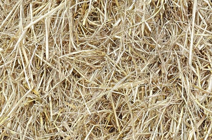 Geleceğin Yeni Kaynağı: Pirinç Samanından Elektrik Üretimi