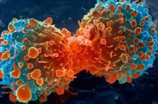 kanser immunoterapisinde daha fazla secenegin ortaya cikarilmasi 310x205 - Kanser İmmünoterapisinde Daha Fazla Seçeneğin Ortaya Çıkarılması