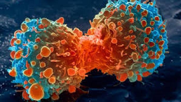 Kanser İmmünoterapisinde Daha Fazla Seçeneğin Ortaya Çıkarılması