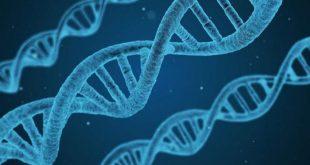 uzmanlar uyardi uzun dna analizi okumalari bazi hatalara yol acabilir 310x165 - Uzmanlar uyardı! Uzun DNA Analizi Okumaları, Bazı Hatalara Yol Açabilir