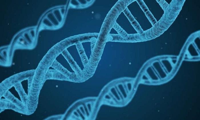Uzmanlar uyardı! Uzun DNA Analizi Okumaları, Bazı Hatalara Yol Açabilir