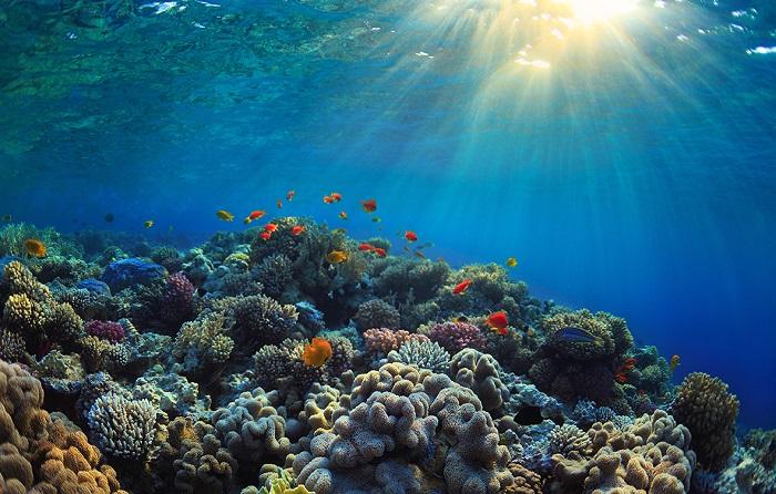 Asitlenen Denizlerimizin Ortaya Çıkan Etkileri