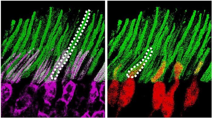 Bilim İnsanları, Nanopartiküller Sayesinde Bir Deney Faresine Gece Görüşü Kazandırmayı Başardı