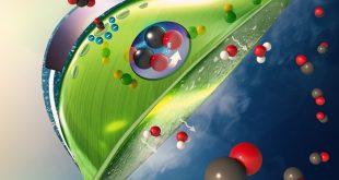laboratuvarda yapilan yapay yapraklari dogaya tasimak 310x165 - Laboratuvarda Yapılan Yapay Yaprakları Doğaya Taşımak!