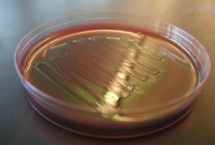 En Derin Okyanus Çukurunda Petrol Yiyen Bakteri Bulundu