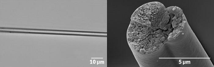 En Güçlü İplik Türü Olan Örümcek Ağı İpi Elde Etmek için Bakteri Kullanılabilir