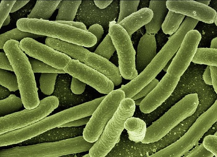 Geleceğin Enerji Kaynağı Bakteriler Olabilir
