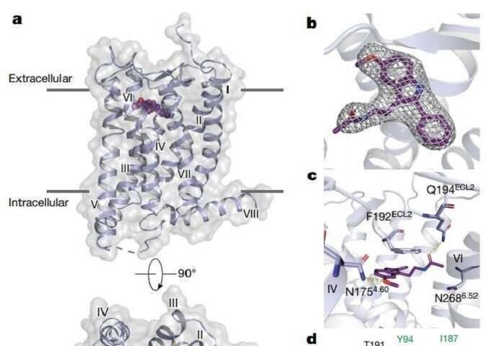 Araştırmacılar Uyku için Gerekli Olan İki Melatonin Reseptörünün İlk Haritasını Oluşturuyor