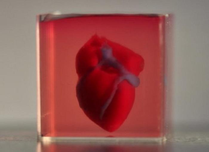 Bilim İnsanları Biyolojik Materyaller Kullanarak 3D Yazıcıyla İlk Kalp Üretimini Başardı