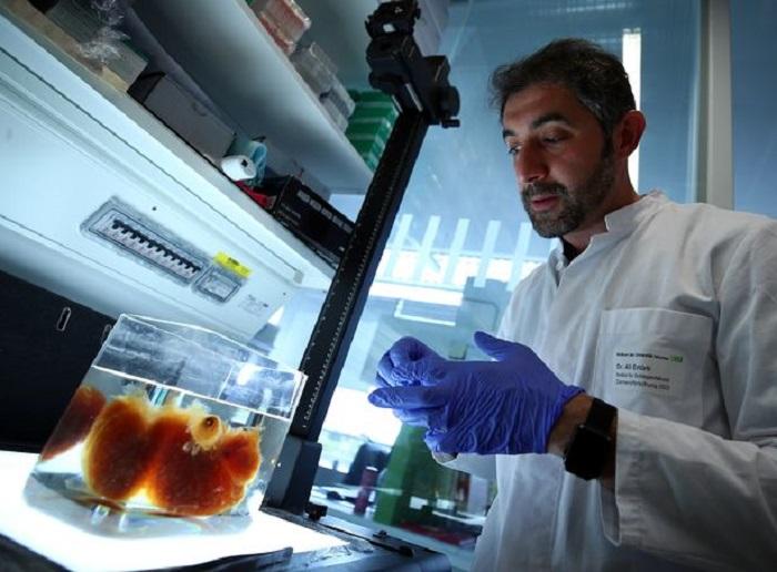 Bilim İnsanları, 'Transparan' İnsan Organları Üretti