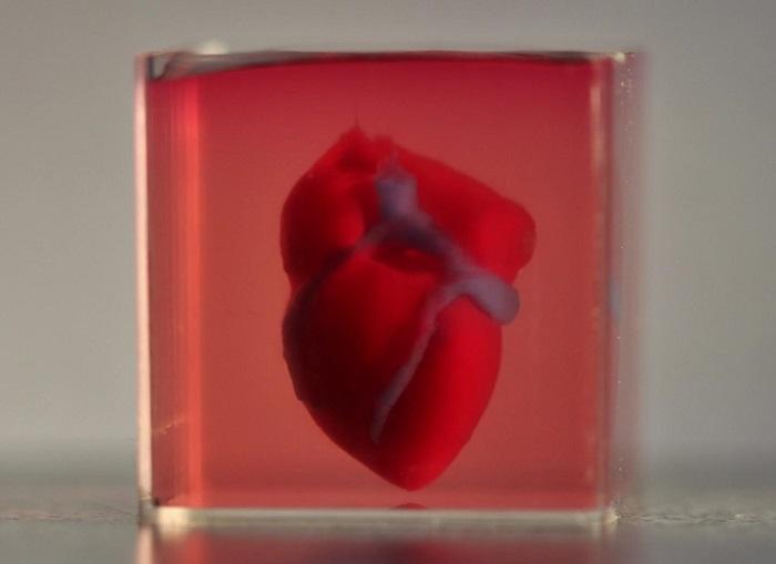 İlk 3 Boyutlu Vaskülerize İnsan Kalbi Basıldı