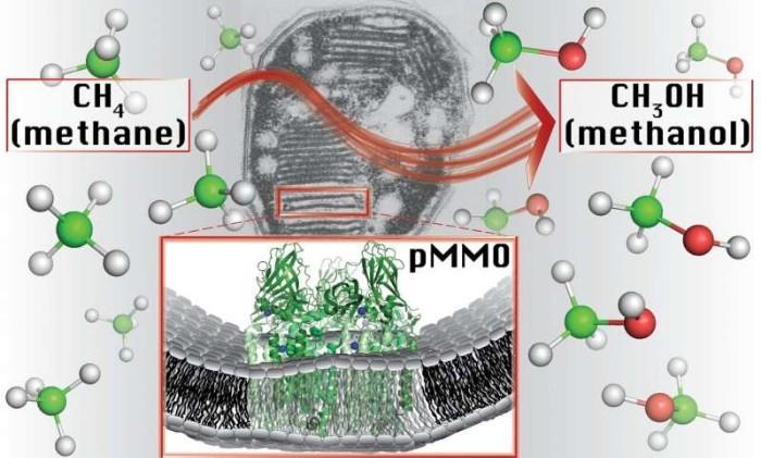 Metan Tüketen Bakteri Yakıtların Geleceği Olabilir