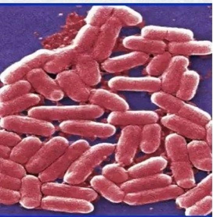 Antibiyotik Dirençli Bakterileri Öldüren Yeni Bileşik Keşfedildi