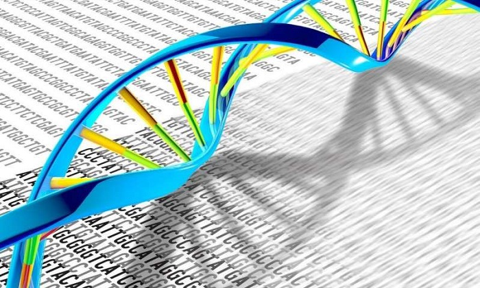 Araştırmacılar Kemoterapiden Sonra DNA'nın İyileşme Sürecini Gözlemliyor