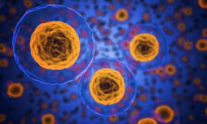 Bağışıklık Hücrelerinin Davranışlarında Metabolizmanın Rolü Keşfedildi