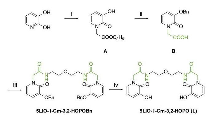 Yeni Bir Ligand Kemiklerden Uranyumu Uzaklaştırıyor