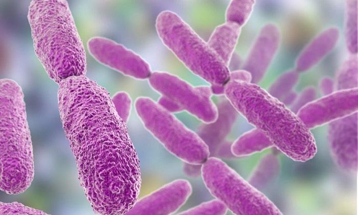 Bakteriler Geleceğin Elektrik Kaynağı Olabilir mi?
