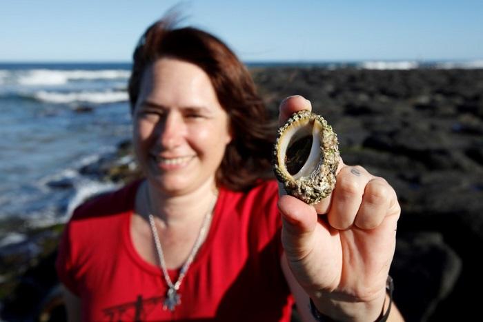 Deniz Salyangozunda, Kanser Hastalarına Umut Olacak Bir Bileşik Bulundu