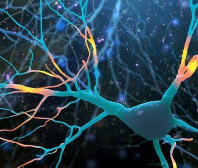 Ketamin Farelerde Yeni Sinir Hücrelerini Besliyor