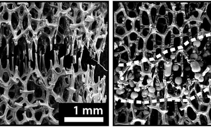 Oda Sıcaklığında İyileşen Kemiksi Metal Köpük Üretildi