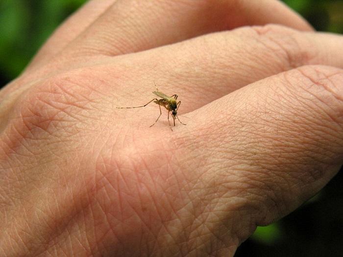 Sivrisinek Isırmasını Engelleyen Kıyafet Geliştiriliyor