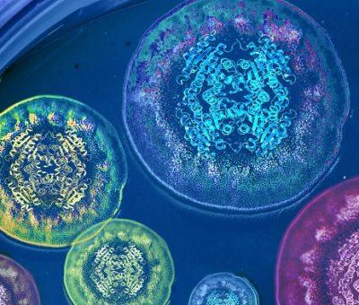 Araştırmacılar, Mantarların Nasıl Bileşik Ürettiklerini Potansiyel Farmasötik Uygulamalarla Çözüyor