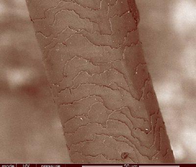 Artık Bilim İnsanları Adli Vakalarda Saç Proteinlerine Bakabiliyorlar