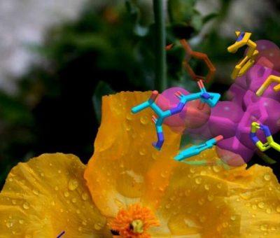 Daha İyi İlaçlar Yapmak için Gelincik Çiçeği