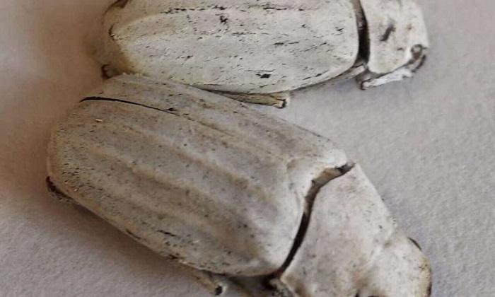 Geri Dönüştürülmüş Plastiklerden Sürdürülebilir Boya Üretmenin Sırrı Böceklerde mi Gizli?