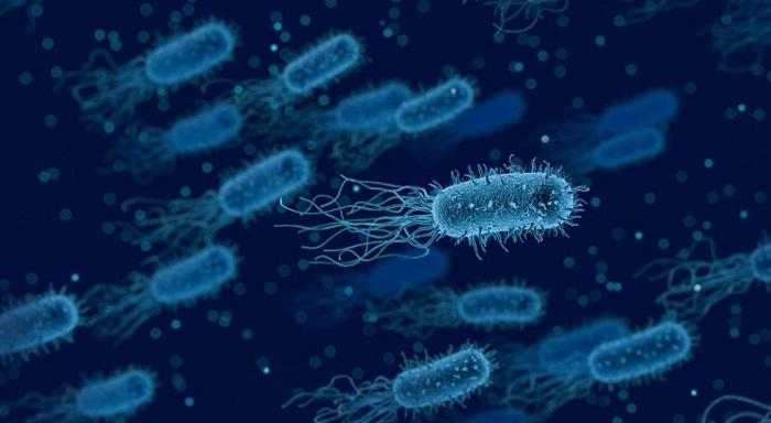 İnsan Vücudundaki Bakteriler, Antibiyotiklerden Kaçmak için Şekil Değiştiriyor