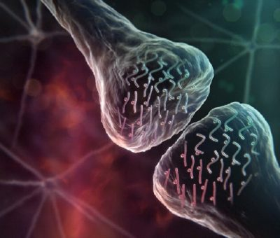 Uyku Yoksunluğu, Temel Beyin Proteinlerinin Üretimini Durduruyor