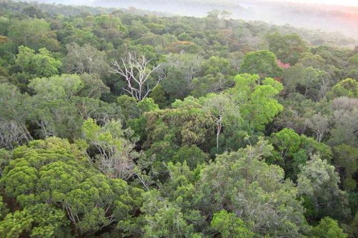 Evrimsel Çeşitliliğin Ağaç Üretkenliği ile İlişkisi