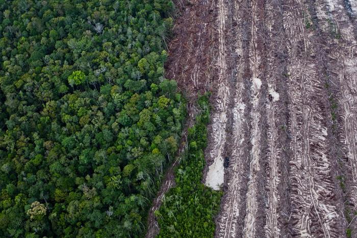 Coğrafyacılar Ormansızlaşmada Bir Eşik Noktası Buldu