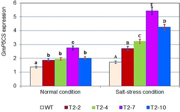 GmDREB6 Geninin Soya Fasülyesine Ekspresyonu, Genetik Olarak Modifiye Edilmiş Soya Bitkilerinde Prolin Birikimini ve Tuz Toleransını Arttırıyor