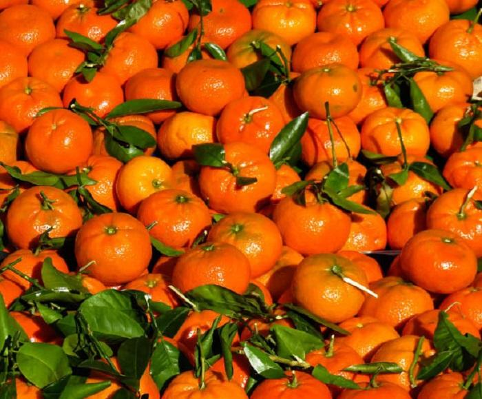 Turunçgillerde Bulunan Nobiletin Flavonoidi Obeziteyi Azaltıyor