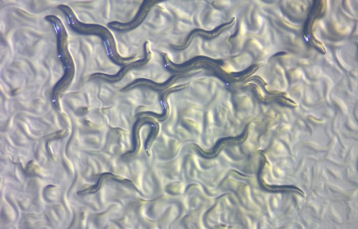 Uzun Bir Yaşamın Sırrı? Solucanlar İçin Hücresel Geri Dönüşen Protein Anahtardır