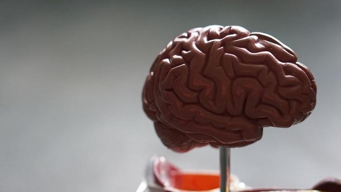 Beyin İnsülin Duyarlılığı Vücut Kütlesi ve Yağ Dağılımını Belirler