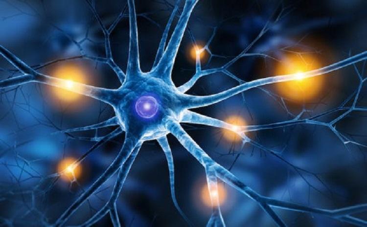 Bilim İnsanları Ağrıyı Derinden Kapatan Beyin Merkezi Buldular