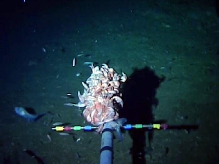 Dünyanın En Derin Okyanus Hendeğinde Antropojenik Cıva Bulundu