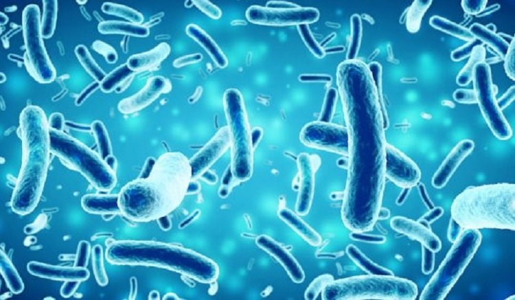 Bakterileri Antiparazit Bileşenler İçeren Potansiyel Antibiyotik Üretmek İçin Çalıştırma