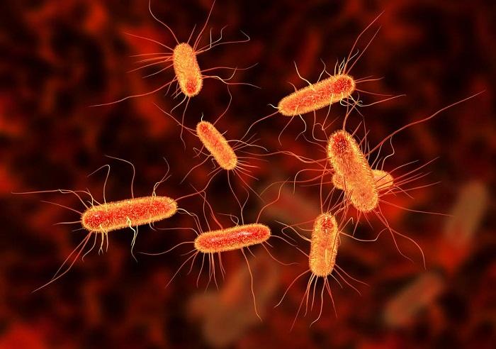 Bakterilerin Ölürken Komşularını Uyarmak için Kimyasal Bir 'Çığlık' Attığı Keşfedildi