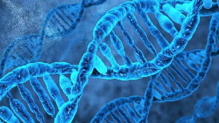 Gen Transferi ile Hammadde Sentezi için Yeni Aday