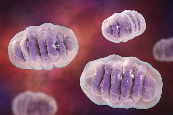 Tek Hücre Analizi, Mitokondriyal Hastalıklar Hakkında Yeni Bilgiler Sunuyor